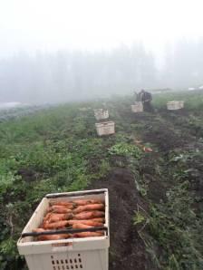 two-bear-farm-photos-065